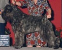 Bouvier Des Flandres image: Am/Can Ch Qiche's Special F/X
