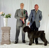 Bouvier image: Taboo winning Best Puppy In Group