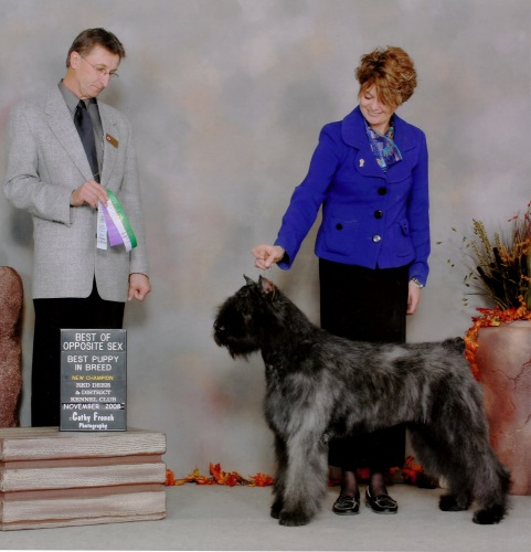 Bouvier image: 'Taboo' winning Best Opposite Sex and Best Puppy In Breed